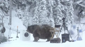 Samsung, viral video, bear video, Ecobubble advert, YouTube