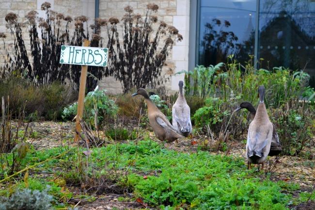 herb-garden-woolley-grange