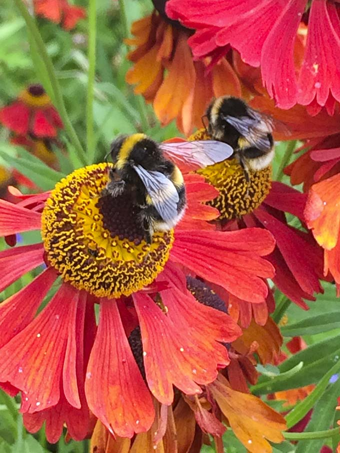bees-on-flower